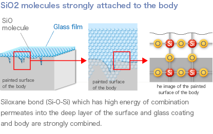 SiO2 molecules strongly attached to the body